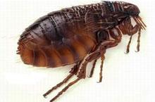 Danh mục loại côn trùng Bo chet 2