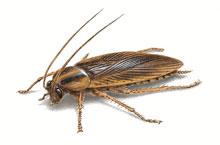 Danh mục loại côn trùng Gian Duc