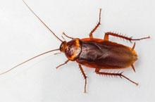 Danh mục loại côn trùng Gian My