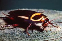 Danh mục loại côn trùng Gian Uc 1