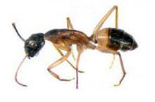 Danh mục loại côn trùng Kien duong 1