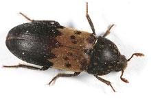 Danh mục loại côn trùng Mot an da lon