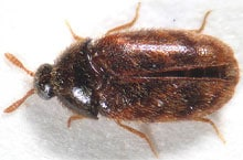 Danh mục loại côn trùng Mot cung dot