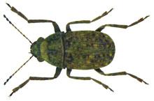 Danh mục loại côn trùng Mot dau cafe