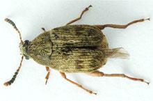 Danh mục loại côn trùng Mot dau nanh