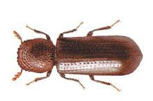 Danh mục loại côn trùng Mot duc than nho