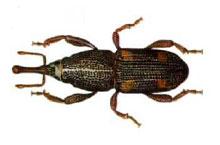 Danh mục loại côn trùng Mot gao