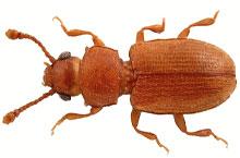 Danh mục loại côn trùng Mot gao det
