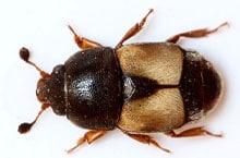Danh mục loại côn trùng Mot hai qua kho