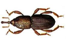 Danh mục loại côn trùng Mot ngo