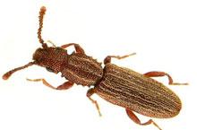 Danh mục loại côn trùng Mot rang cua
