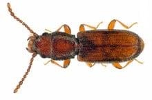 Danh mục loại côn trùng Mot rau dai
