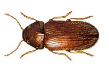Danh mục loại côn trùng Mot thuoc bac