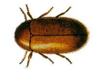 Danh mục loại côn trùng Mot thuoc la