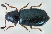 Danh mục loại côn trùng Mot xuong
