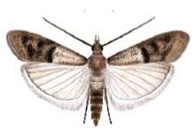 Danh mục loại côn trùng Ngai An do