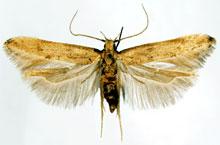 Danh mục loại côn trùng Ngai mach