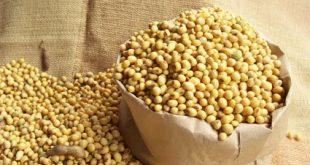 IPGA: Gia hạn thêm 1 năm cho phép nhập khẩu các loại nông sản được khử trùng methyl bromide dau tuong 1 310x165