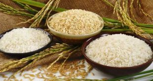 Rice exports have increased in both quantity and value xuat khau gao vov 310x165