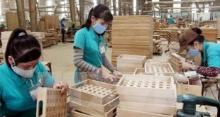 Exports of wood and forestry products targeted $ 8.5 billion xuatkhaudogo 310x165