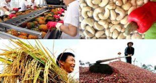 Nông sản Việt xuất ngoại: Ám ảnh dư lượng kháng sinh, chất bảo vệ thực vật nong nghiep vn 310x165