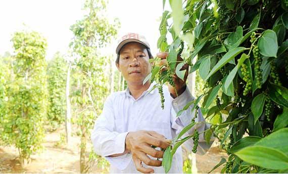 MRL – điểm yếu của nông dân và doanh nghiệp Việt tieu 1
