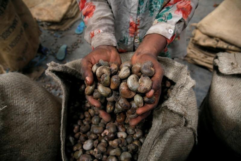 Tanzania mua toàn bộ điều trong nước, giá điều Việt Nam và Ấn Độ có thể tăng mạnh 5308 cashew