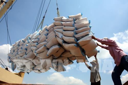 11 tháng, xuất khẩu nông, lâm, thủy sản tăng hơn 9% 185113 chum anh gia gao xuat khau cua viet nam bat ngo vuot qua thai lan