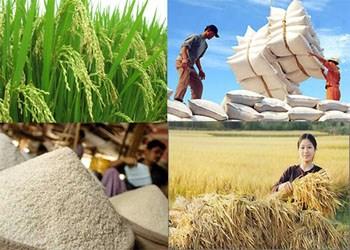 Xuất khẩu gạo sẽ thoáng hơn xk gao 4ea20