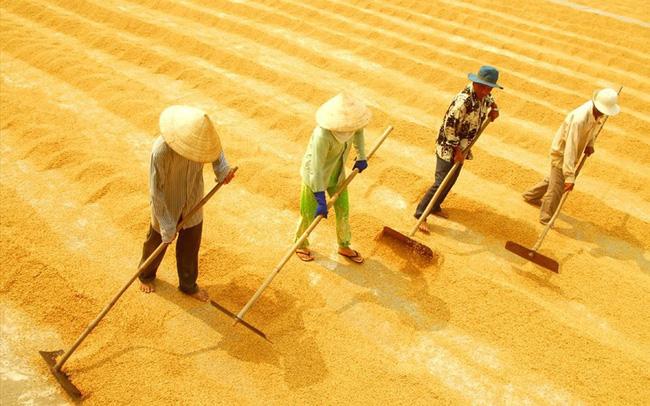 """Xuất khẩu gạo Việt Nam """"thẳng tiến"""" tới mốc 6,15 triệu tấn xuat khau gao chat l 15435670886161699530870 crop 1543567140728515265969"""