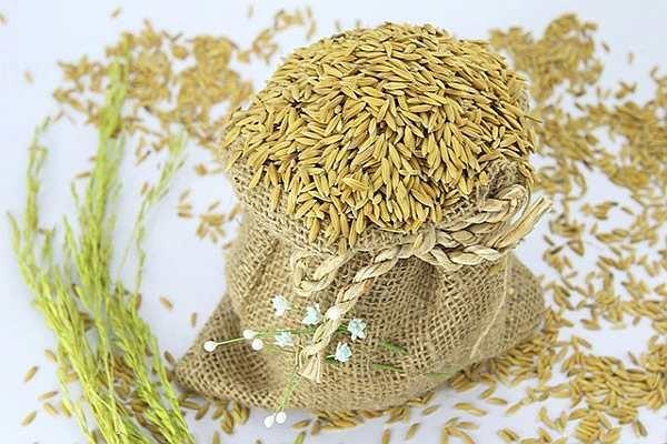 Giá gạo xuất khẩu Việt Nam, Thái Lan dự kiến giảm trong thời gian tới vì nguồn cung tăng 1648 market paddy 3 markettiemstv