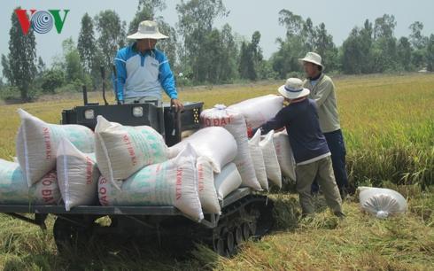 Gạo Việt đã xuất khẩu đi hơn 150 thị trường, cơ hội tiếp tục rộng mở gao viet da xuat khau di hon 150 thi truong co hoi tiep tuc rong mo 04