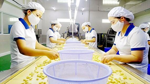 Năm 2018, ngành điều xuất khẩu 3,52 tỷ USD, đứng vị trí số 1 thế giới xuat khau dieu sggp jrpt