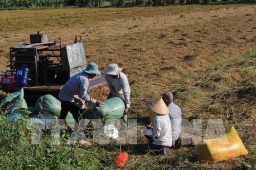 Dự kiến tháng 3 sẽ tổ chức đấu thầu thu mua lúa gạo 171416 an giang ban giai phap tieu thu lua gao vu dong xuan 2018 2019 cho nong dan