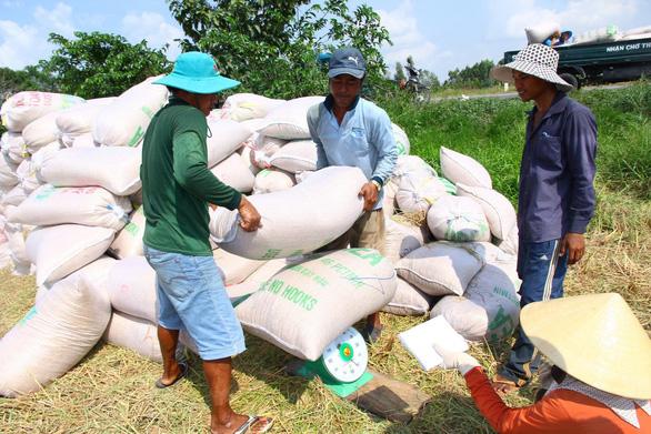 Trung Quốc áp thuế cao, xuất khẩu gạo Việt gặp khó trung quoc ap thue cao xuat khau gao viet gap kho 00