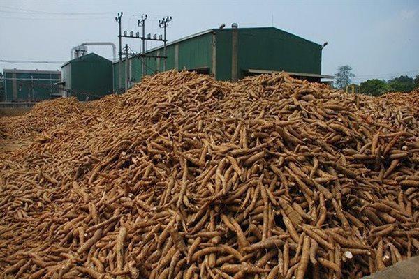 Trung Quốc công bố 66 đơn vị sản xuất sắn của Việt Nam được phép xuất khẩu xk san