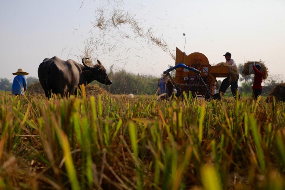 Philippines giải quyết bài toán để tỉ lệ tự cung cấp gạo đạt 93% khi tự do hóa nhập khẩu 0028 MG 1069