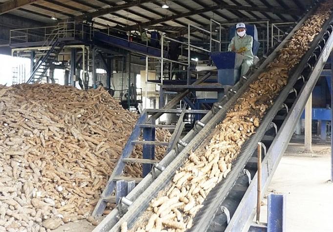 Xuất khẩu sắn giảm mạnh cả lượng và giá trị 4016 xk sYn