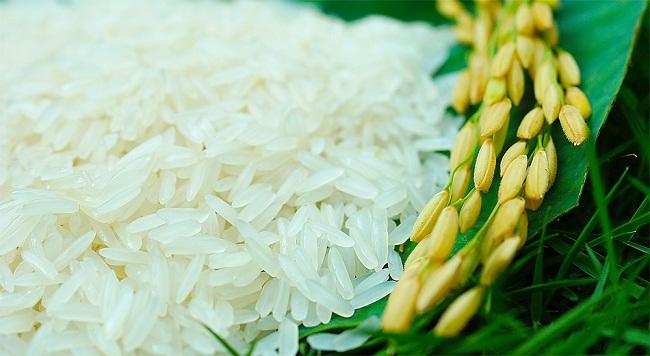 Tập trung gỡ khó xuất khẩu nông sản gao 504 3