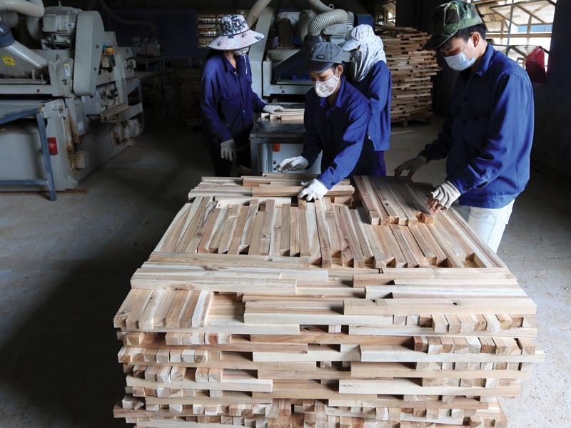 Gia tăng liên kết sản xuất, chế biến gỗ gia tang lien ket san xuat che bien go1552251389