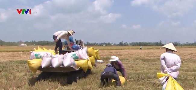 Nhiều hợp đồng xuất khẩu gạo được ký kết lua gao