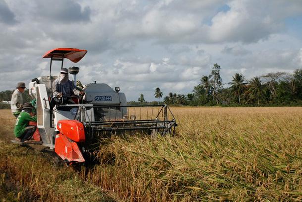 Giật mình giá xuất khẩu gạo luabtzm 15530675713831204001032
