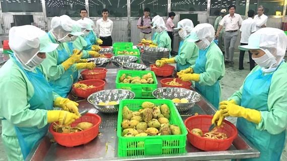 Thay đổi để xuất khẩu ổn định sang Trung Quốc p4c evzp