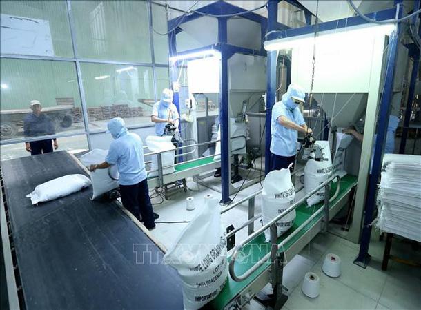 Đẩy mạnh xúc tiến xuất khẩu gạo sang các thị trường tiềm năng photo 1 1553128091106677764751