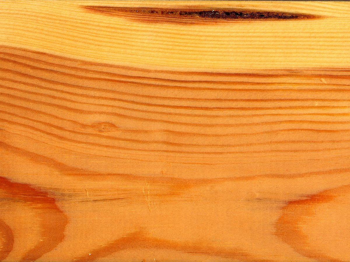 WTO ủng hộ Canada về thuế nhập khẩu gỗ mềm 1200px Pinus sylvestris wood ray section 1 beentree