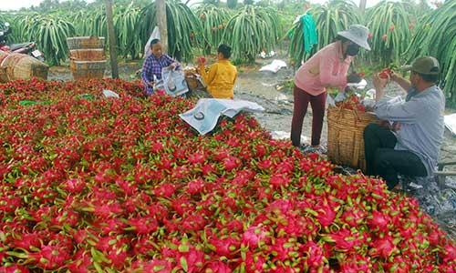 Trung Quốc sẽ xả kho dự trữ, hạt gạo Việt gặp khó 20190410 trung quoc se xa kho du tru hat gao viet gap kho 1