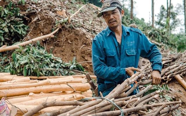 Phát triển bền vững lâm sản ngoài gỗ 7dec40837453eeef54e12cc582d32152