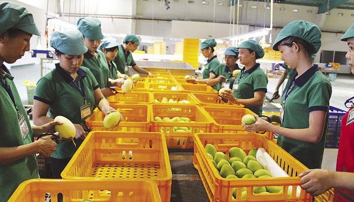 Để nông sản Việt trụ vững tại thị trường châu Âu anh20bai20duoi20trang2062 15547828319561967449071 crop 1554782860219452347928