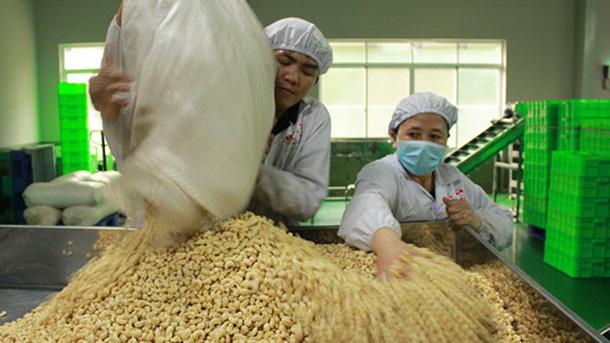 Cục Bảo vệ thực vật nói gì về lô hạt điều nhập khẩu có mọt nguy hiểm? dieu 1554454791493698308271