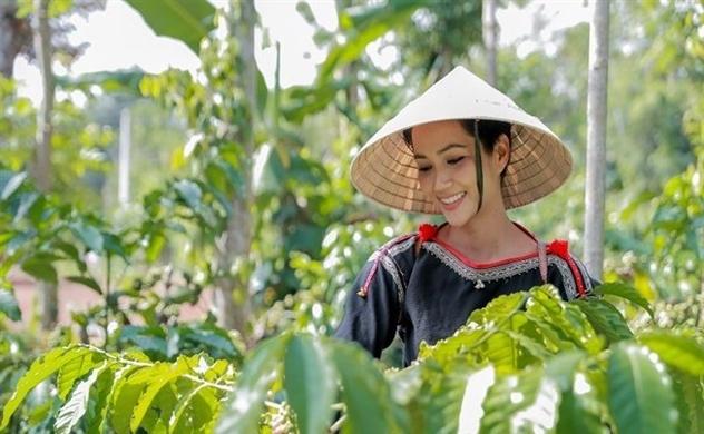 Cà phê Robusta Việt Nam đổ bộ vào thị trường Nhật Bản hhennie hai ca phe 5179600